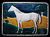 KF29103 *NOS* VINTAGE 1970s **AMERICAN QUARTERHORSE** LACQUERED PEWTER BUCKLE