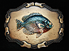 OC29109 VINTAGE 1978 **PERCH FISH** FISHING TROPHY BRASSTONE RAINTREE BUCKLE